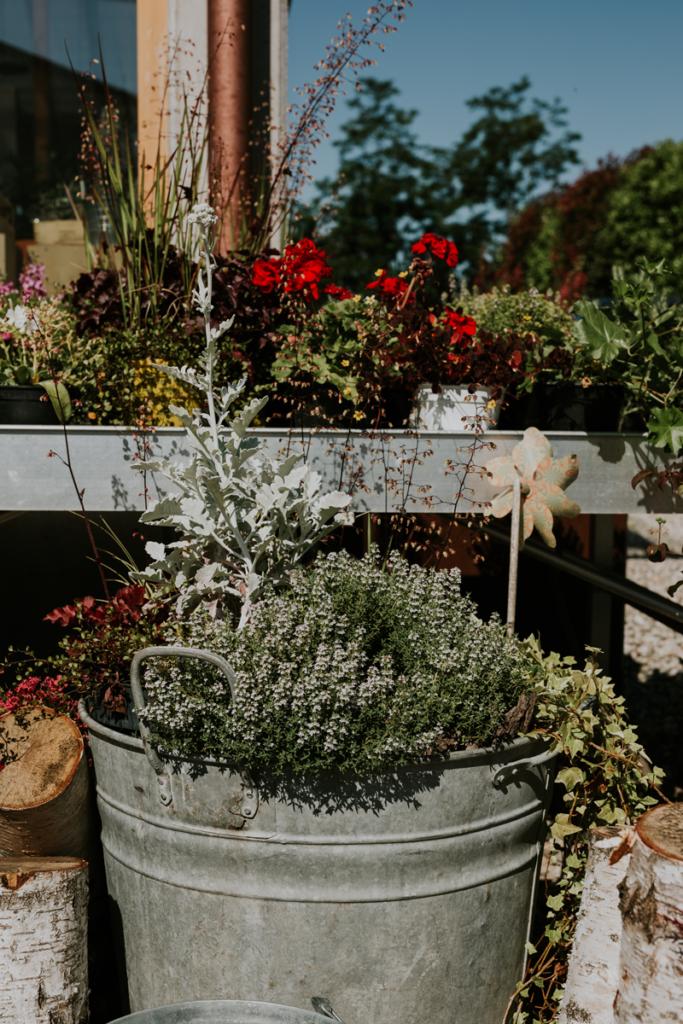 interno flower farm 2