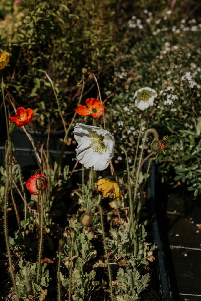 fiori flower farm