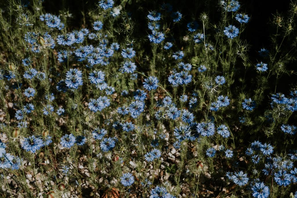 primavera in farm