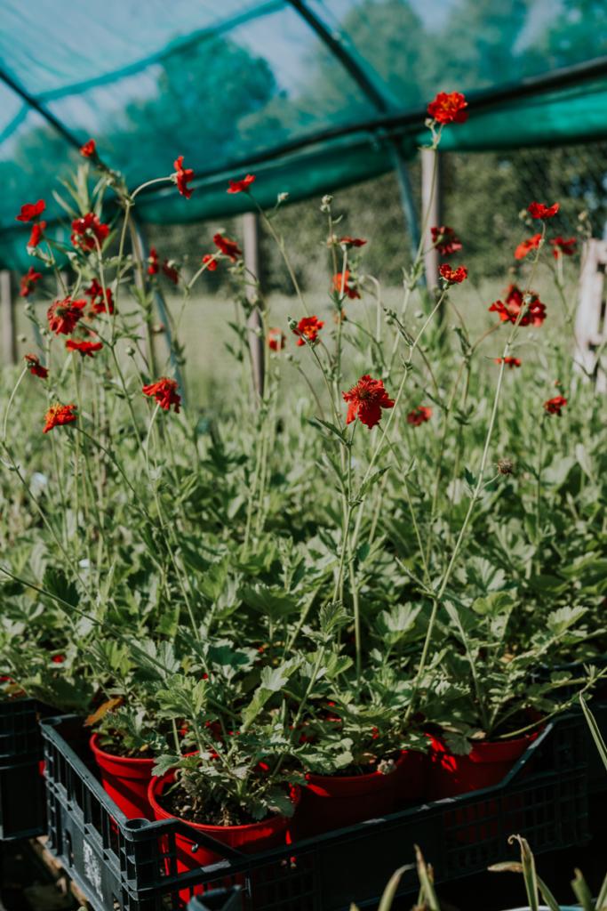 La primavera flower farm